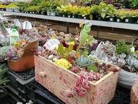 Succulent planters are as popular as ever...