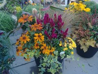 And fall combination planters...