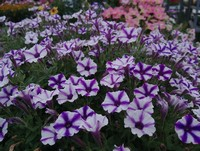 Fresh annuals to brighten up any fall container or empty spot in your yard...