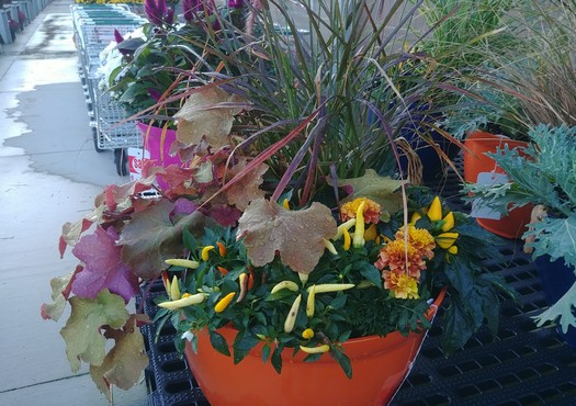 2019 FALL grows at W.W.!