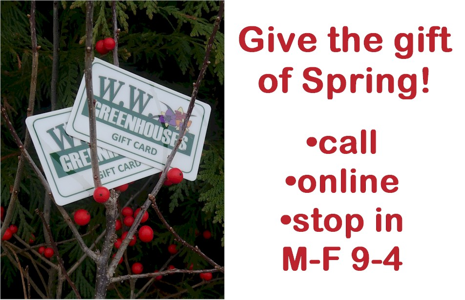 Give the gift of Spring at W.W.!