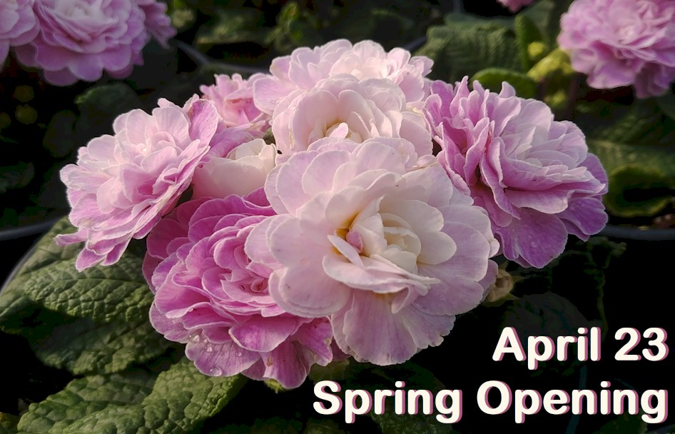 2021 Spring Opening at W.W.!